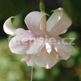 fuchsie White Marshmalow - Fuchsia White Marshmalow